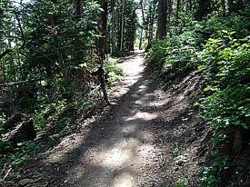 Junes bottom utah mountain biking